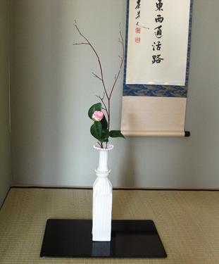 Camellia called Akebono