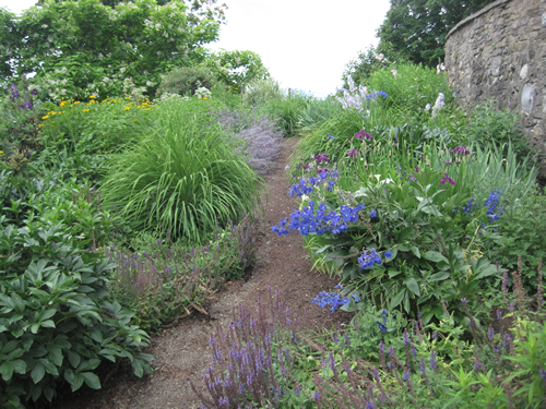 The path curves up and hugs the wall. Blue delphinum, purple catmint and the leaves of peony and grasses lead the way.