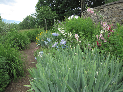 Almost to the end with the view in site. Leaves of Iris, pink Hollyhock and always a smattering of yellow.