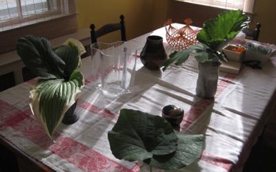 A small, intimate garden