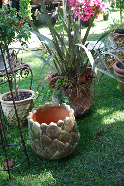 I really wanted to get this acorn or pineapple pot.